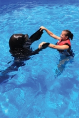 """<h5>Sea Lion Splash</h5><p>Swim with the sea lions at Coral World Ocean Park, an up close and personal adventure with these """"adorable"""" creatures.</p>"""