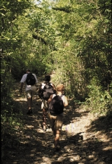 <h5>Hiking St. John</h5><p>Hiking the trails throughout the National Park the guide will ensure you learn a great deal about the fascinating history of the Island and just may let you take a dip while you pass one of the many beautiful beaches.																	</p>